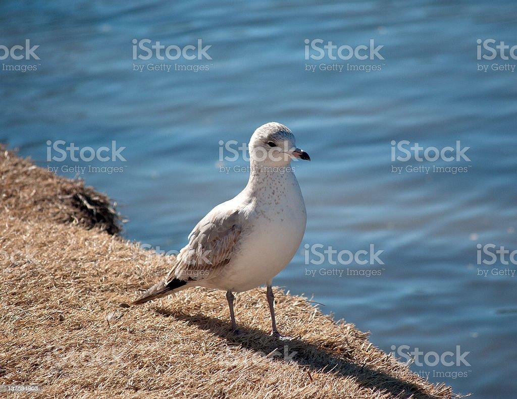 鳥の銀行 ロイヤリティフリーストックフォト