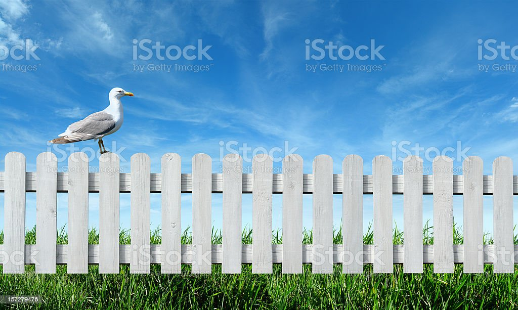 Bird on the Fence royalty-free stock photo