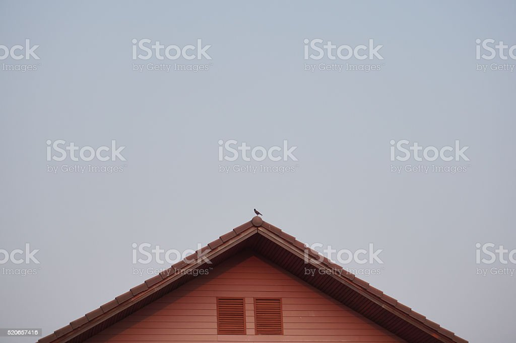 Bird on the roof royalty-free stock photo