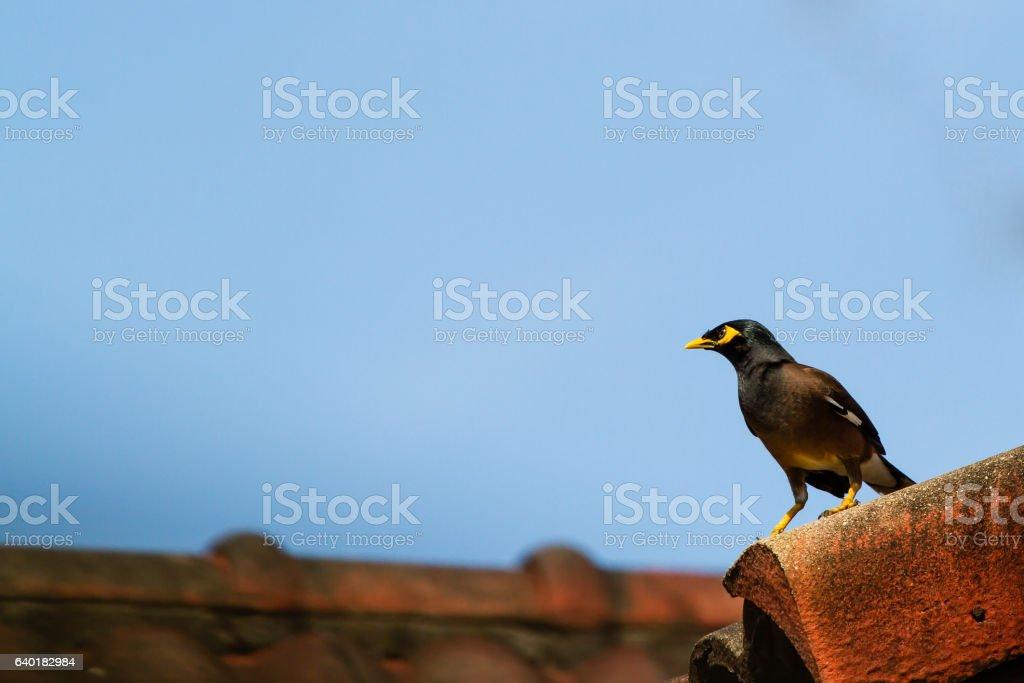 Bird on the roof. stock photo