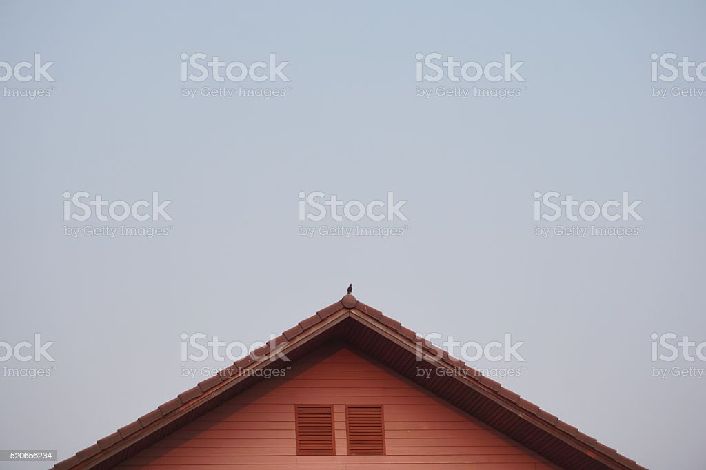 Bird on the roof top royalty-free stock photo
