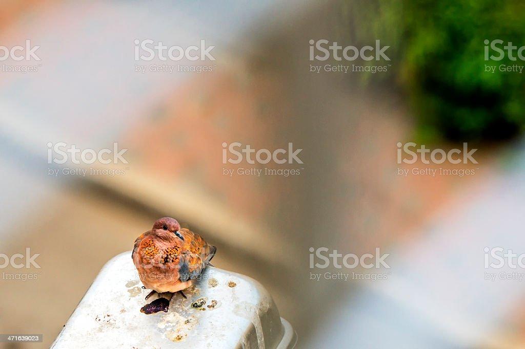 Bird on the  street lamb stock photo