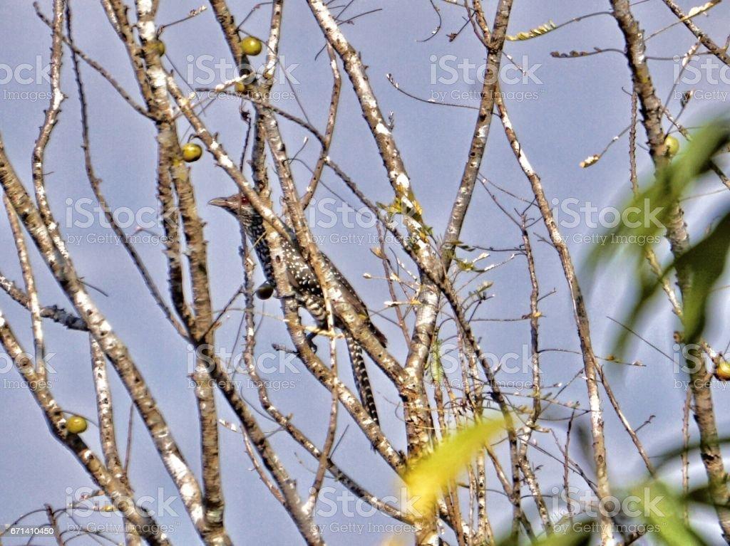 Bird on the tree stock photo