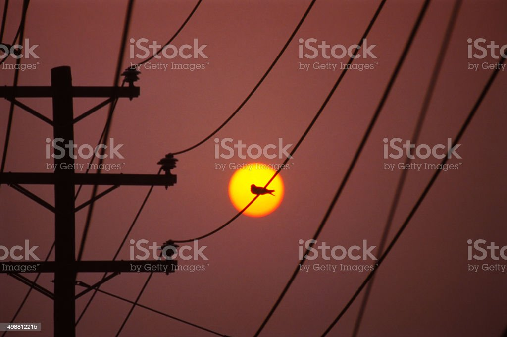 Bird on Wire in front of the Sun stock photo