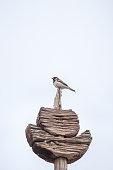 Bird on wooden stand