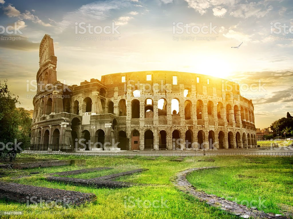 Bird over Colosseum stock photo