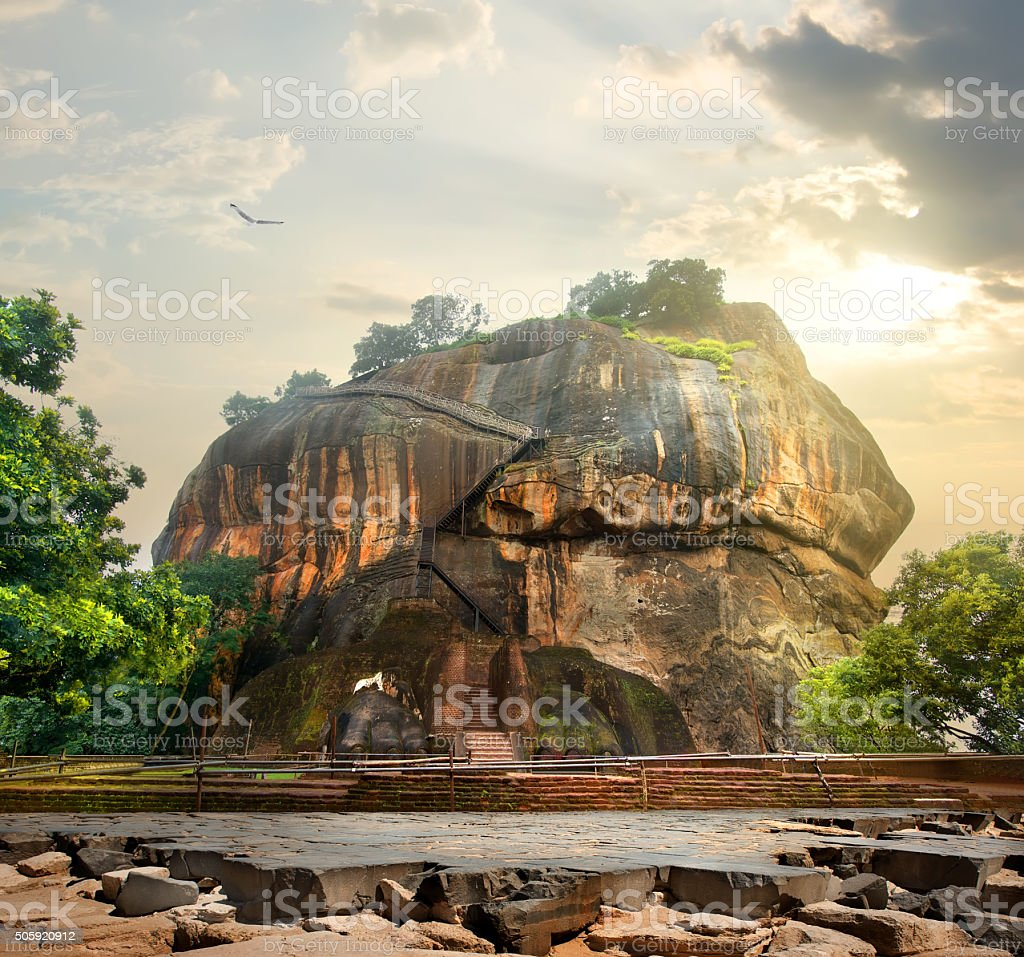 Bird over Sigiriya stock photo
