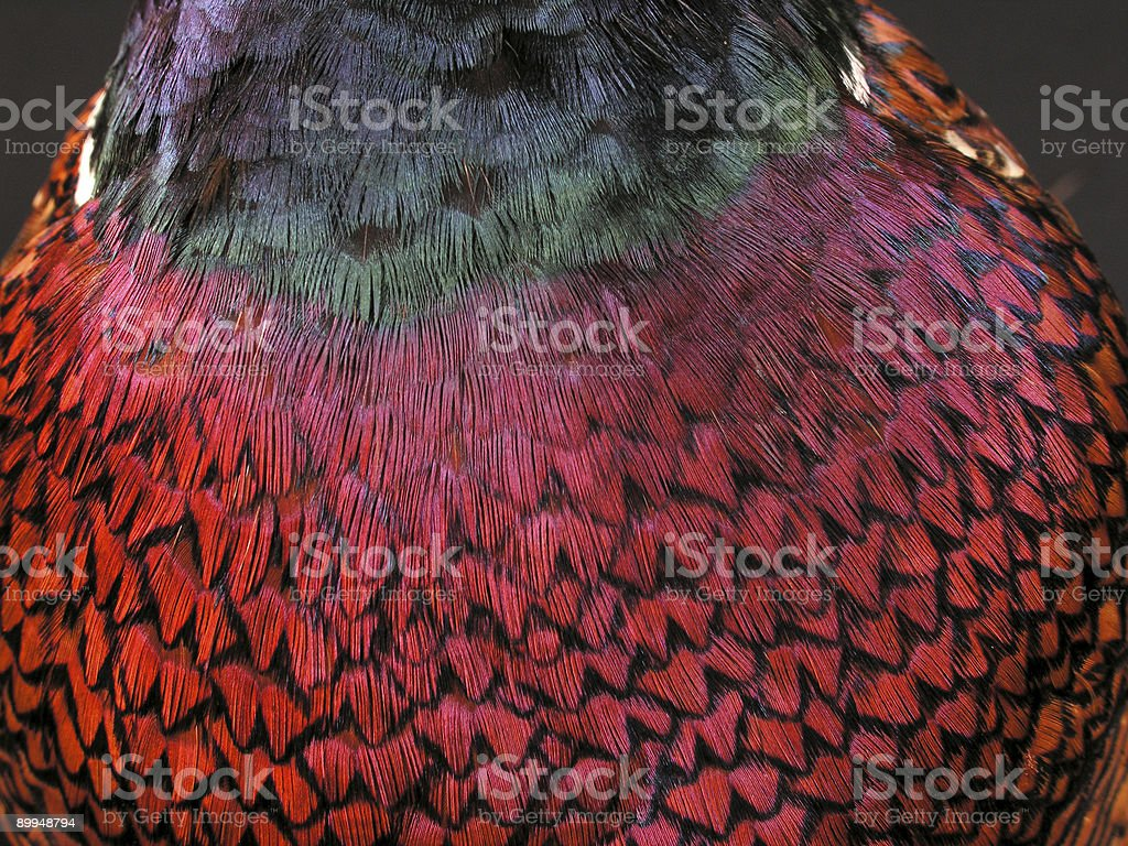 Bird Pattern royalty-free stock photo