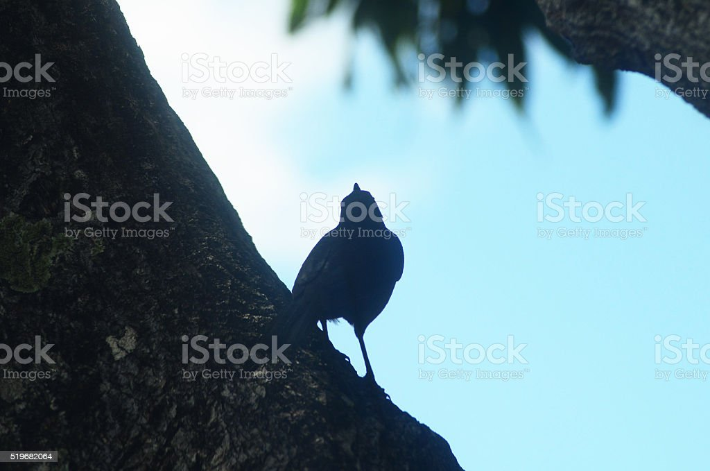 bird perched in tree silhouette stock photo