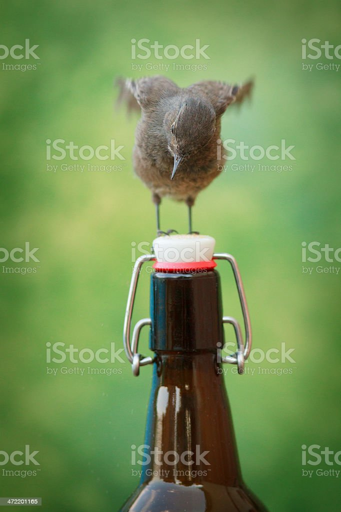 Bird perched on a beer bottle stock photo