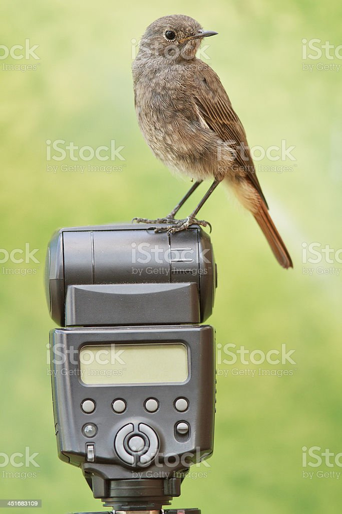 Bird perched on a camera flash stock photo