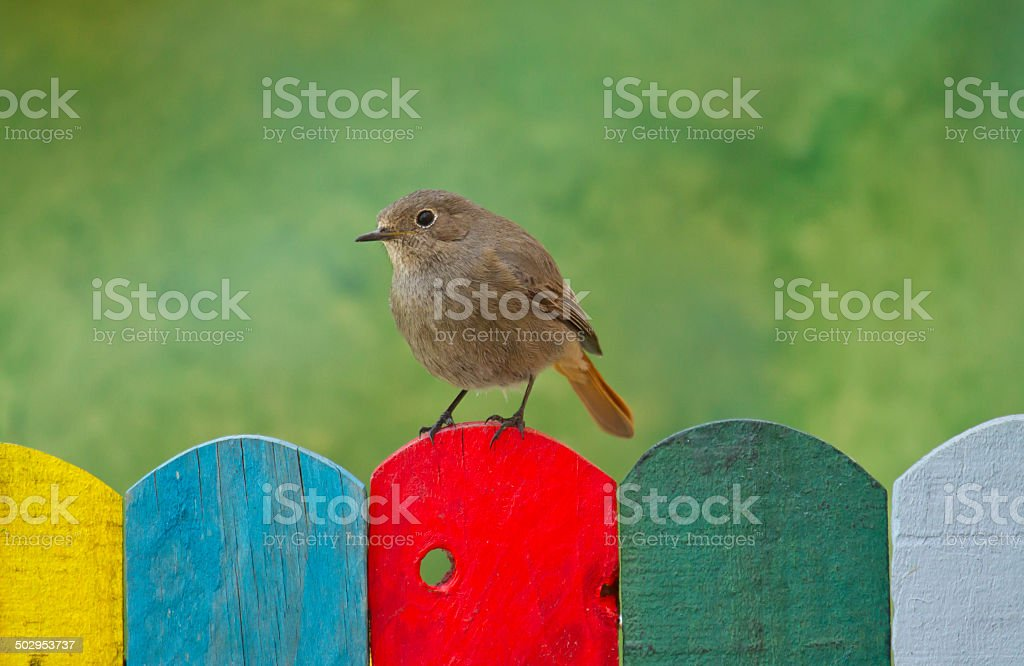 Bird perched on a colorful fence stock photo