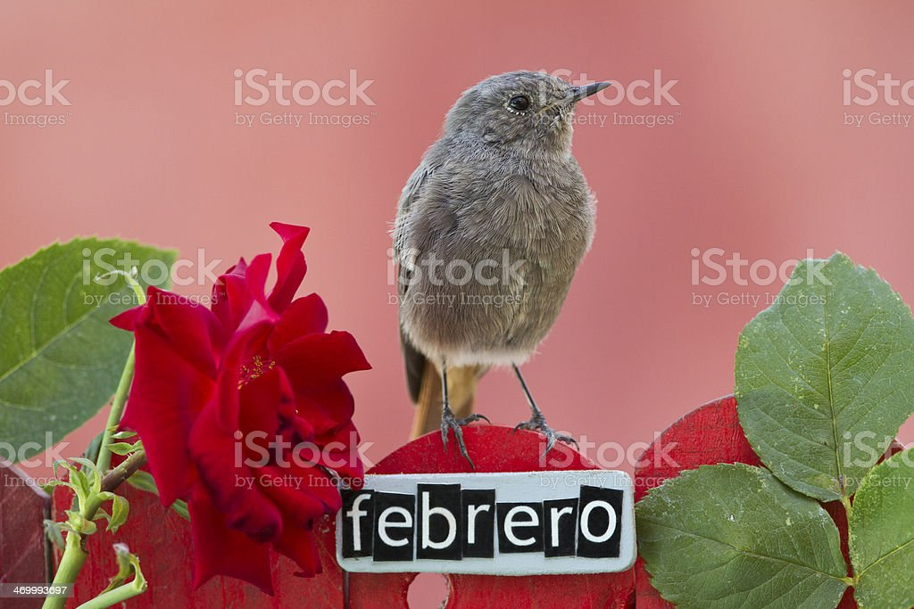 Bird perched on a February decorated fence stock photo