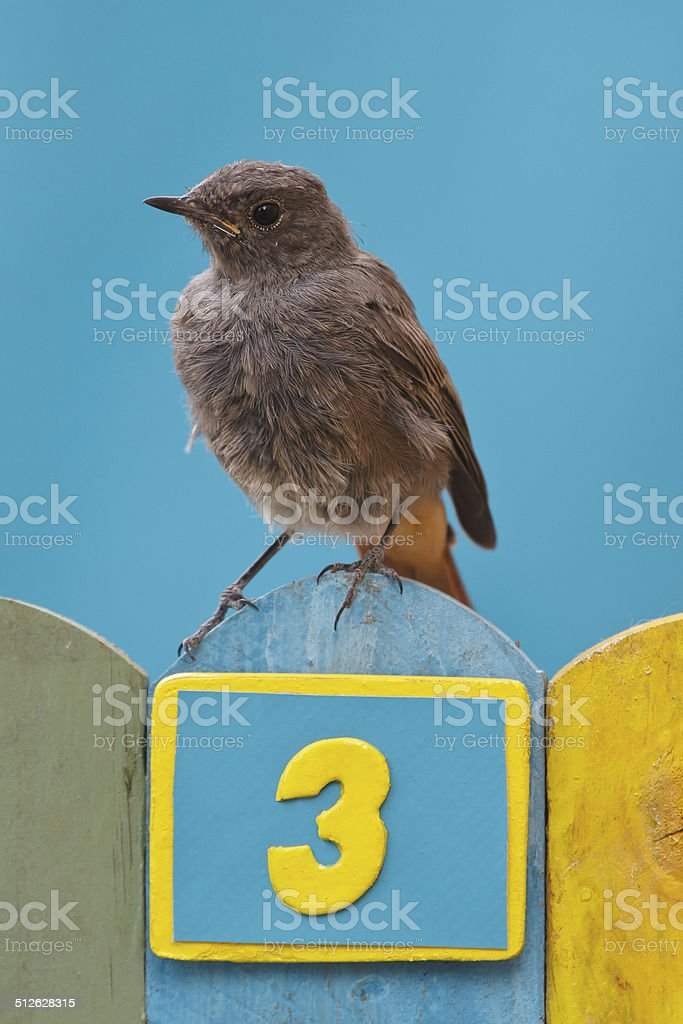 Bird perched on a fence decorated with number three stock photo