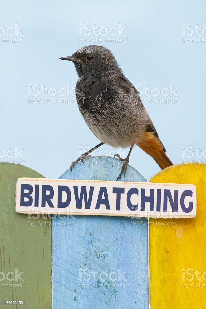 Bird perched on a fence decorated with the word birdwatching stock photo