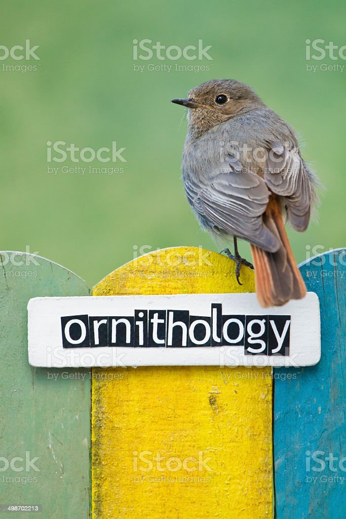 Bird perched on a fence decorated with the word ornithology stock photo