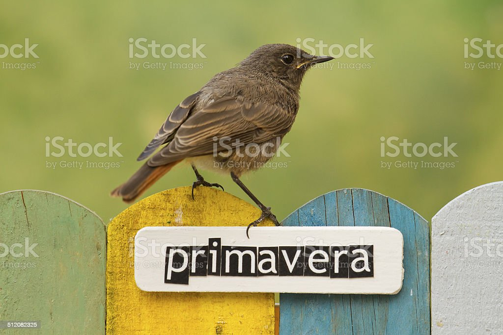 Bird perched on a fence decorated with the word spring stock photo