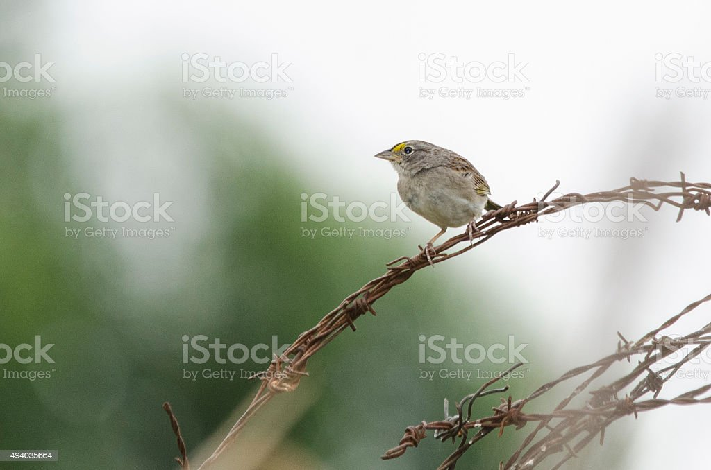bird perched on a fence stock photo