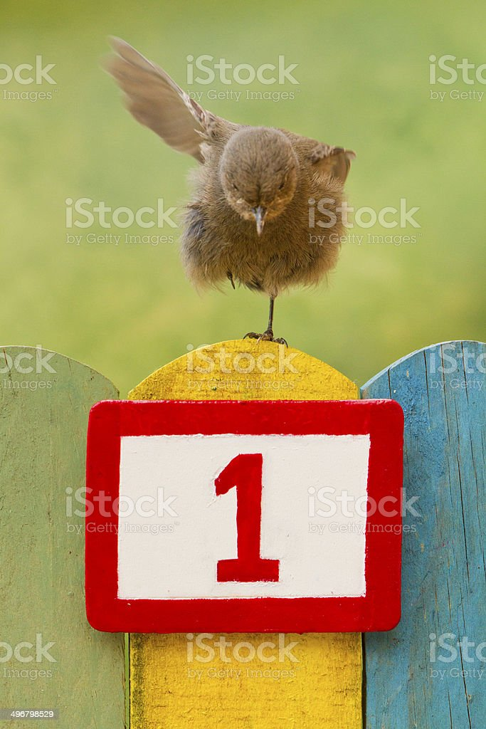 Bird perched on a fence with the number one painted stock photo