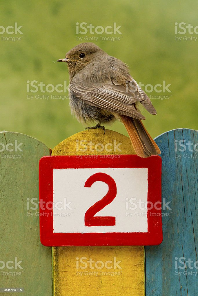 Bird perched on a fence with the number two painted stock photo