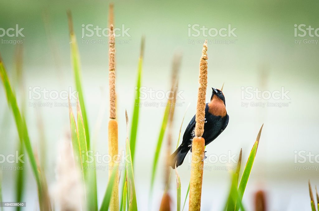 bird perched on a plant stock photo