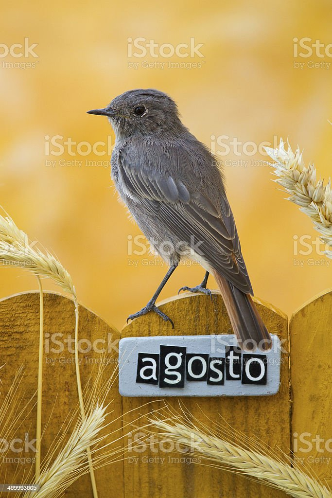 Bird perched on an August decorated fence stock photo