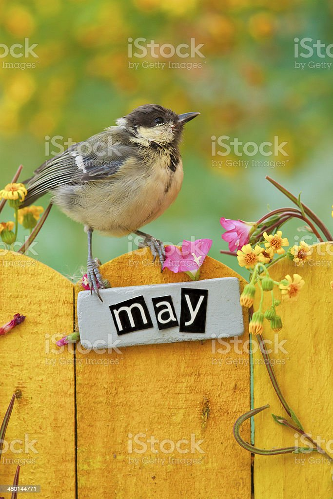 Bird perched on an May decorated fence stock photo