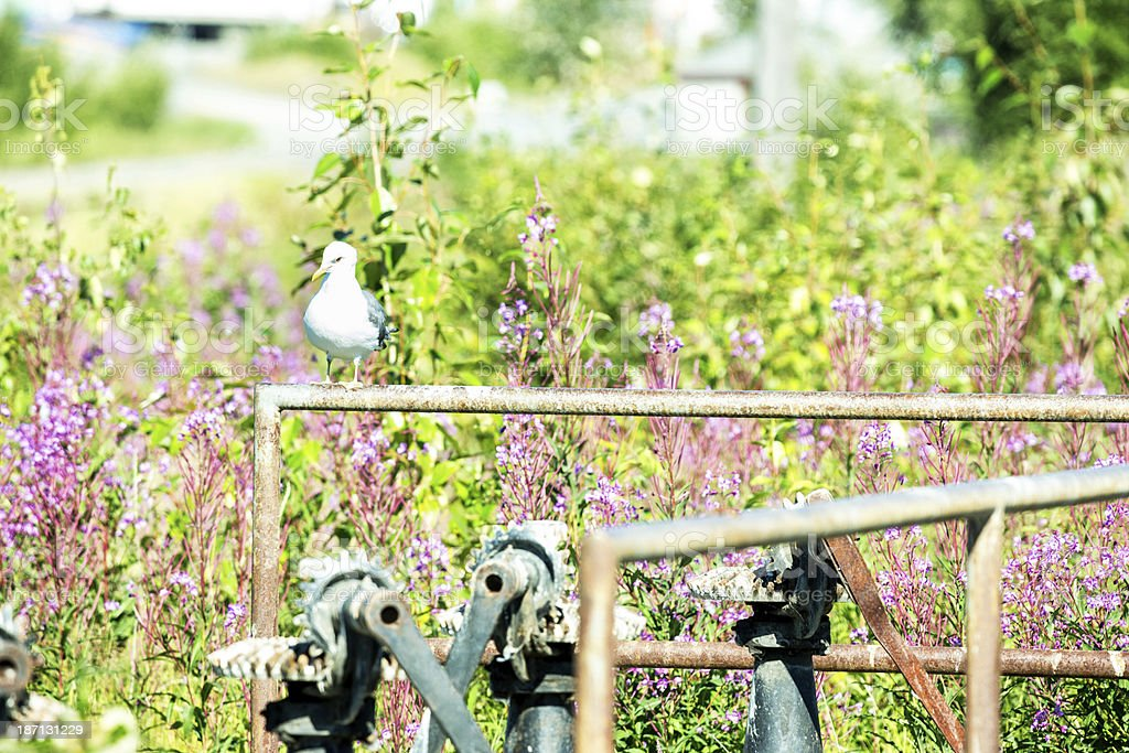 Bird perched on irrigation pipe in field royalty-free stock photo
