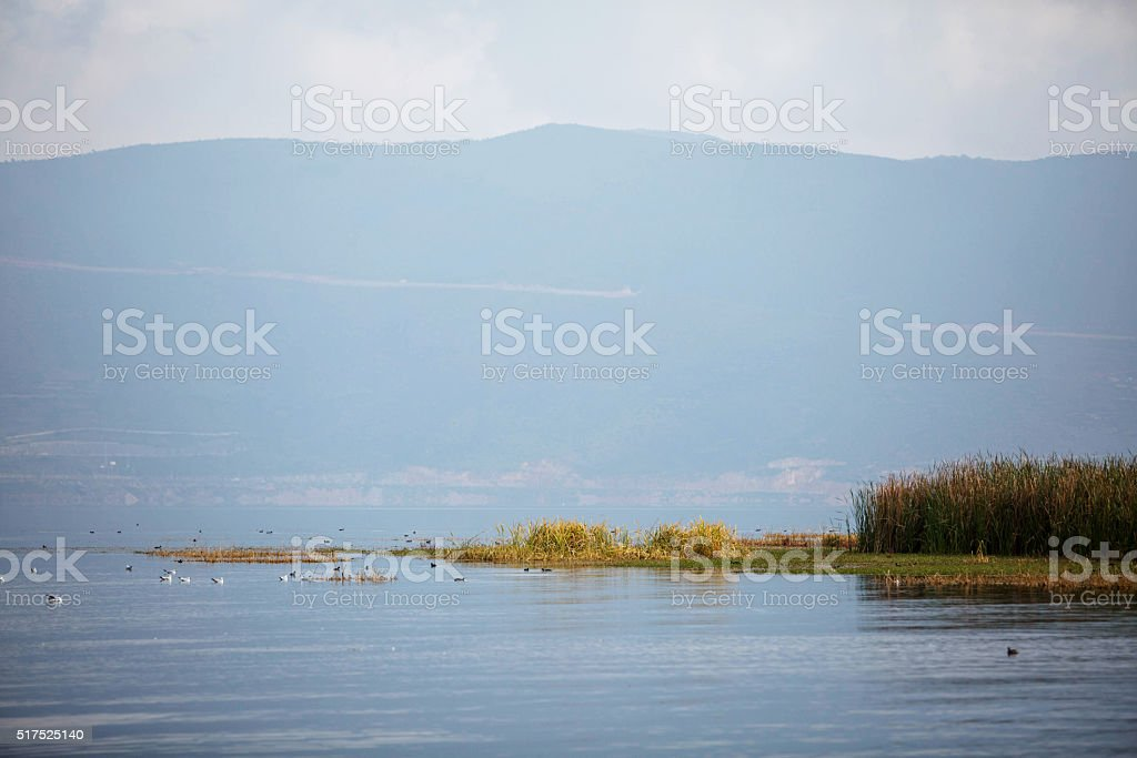 bird perching on wetland stock photo