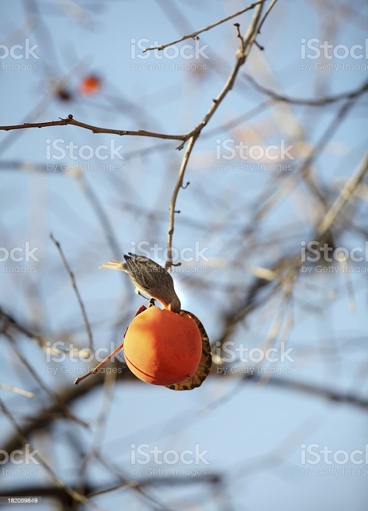 Bird  & Permission royalty-free stock photo