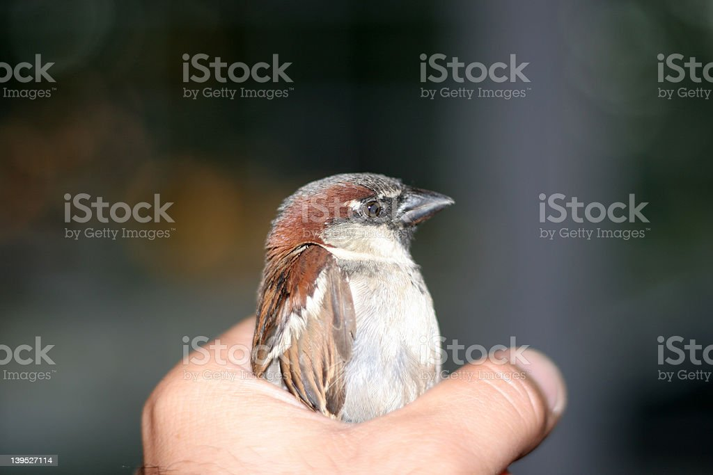 Bird stock photo