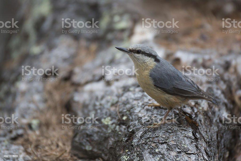 Bird royalty-free stock photo
