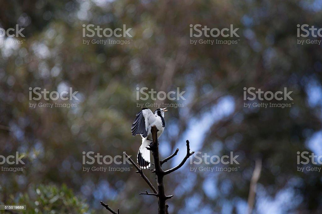Bird stock photo