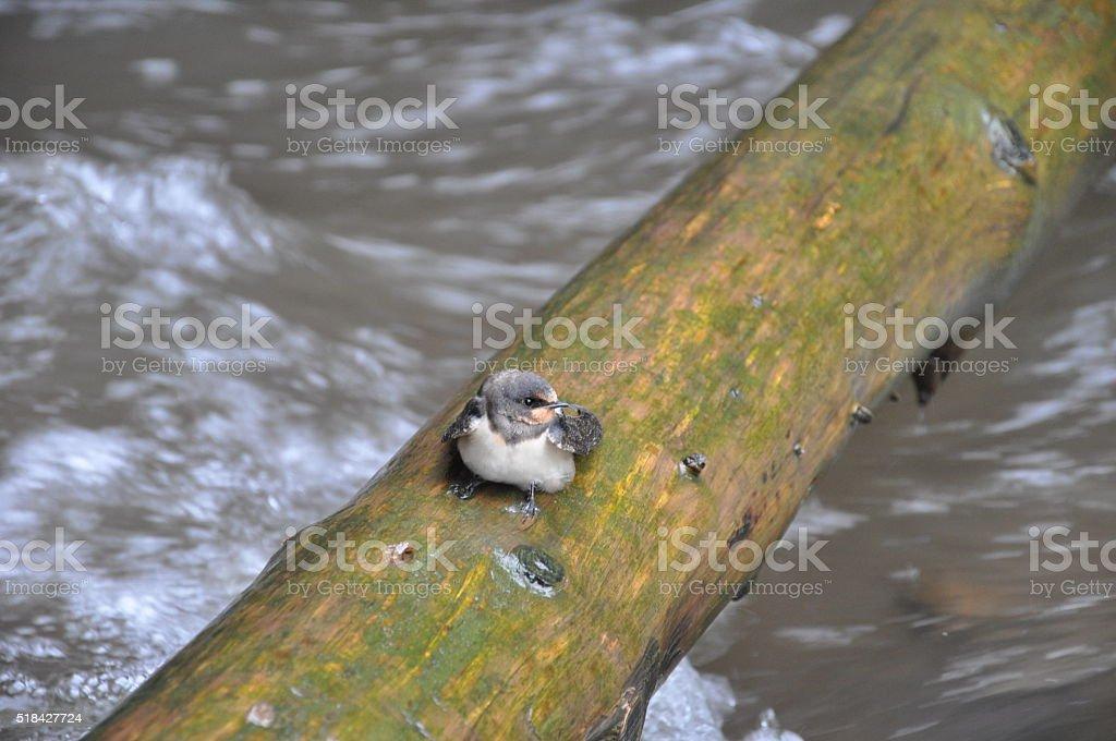 Pájaro foto de stock libre de derechos
