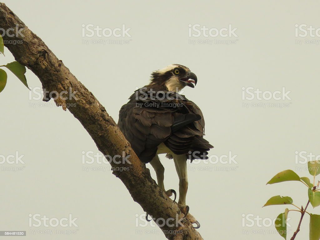Bird  Lizenzfreies stock-foto