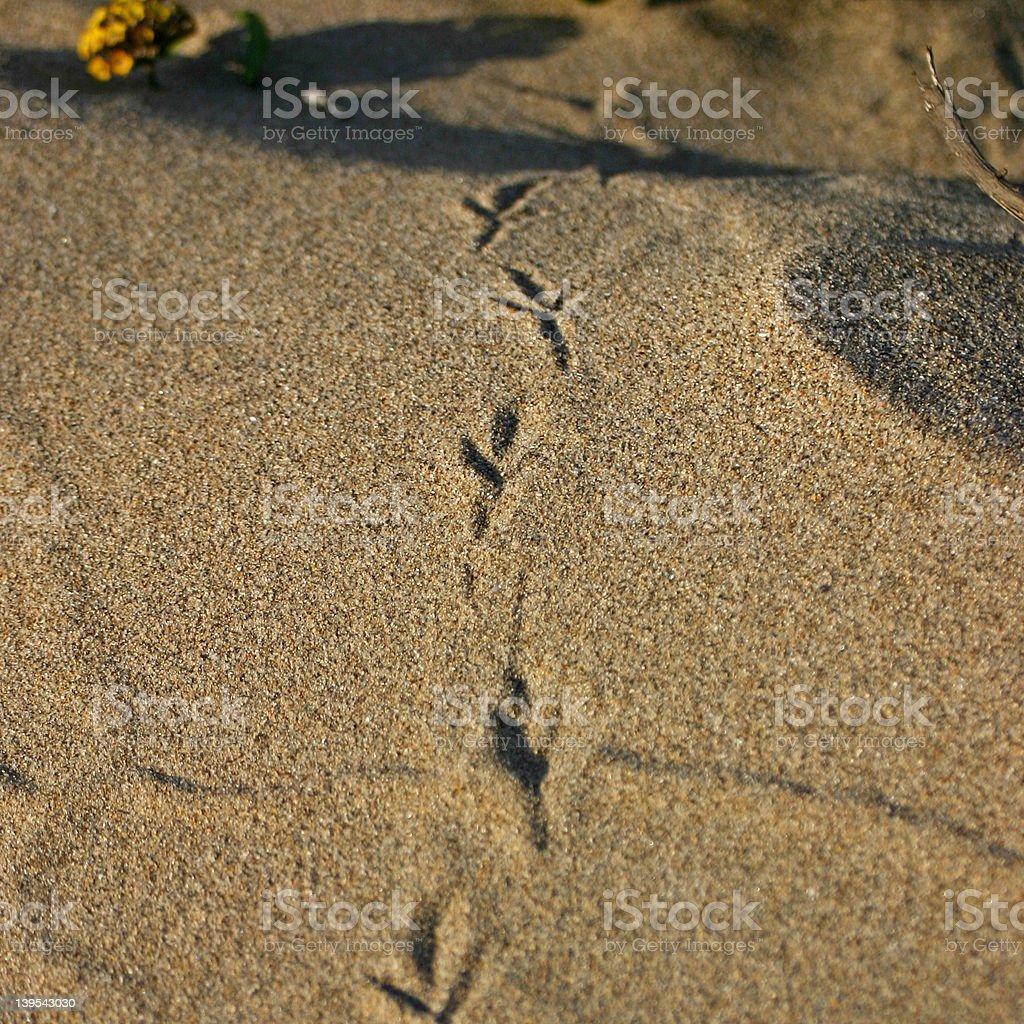 Bird prints in the Sand stock photo