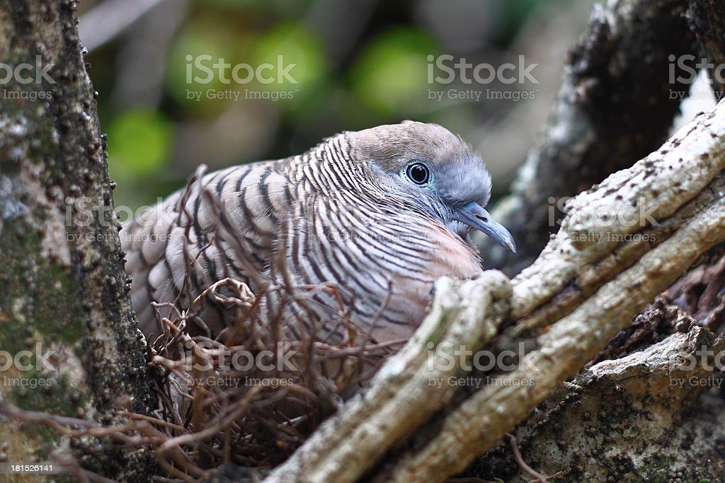 Bird relax in nest royalty-free stock photo