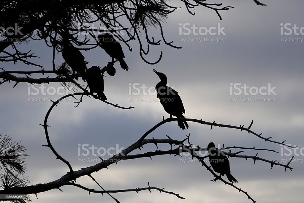 Bird resting in a tree, silhouette stock photo