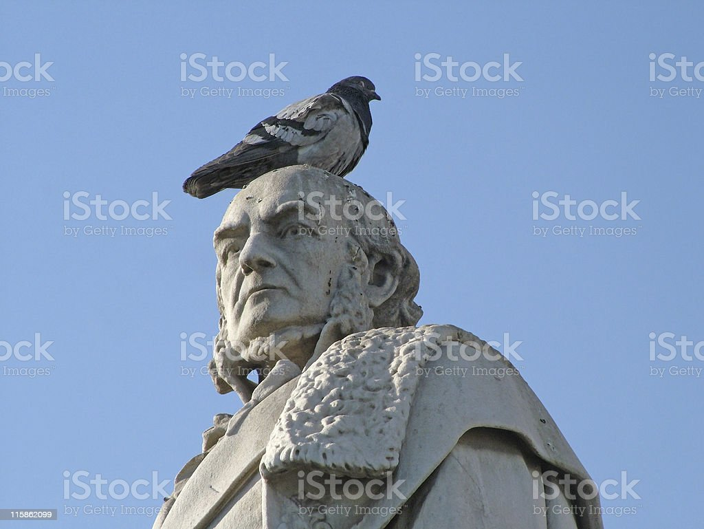 Bird resting royalty-free stock photo