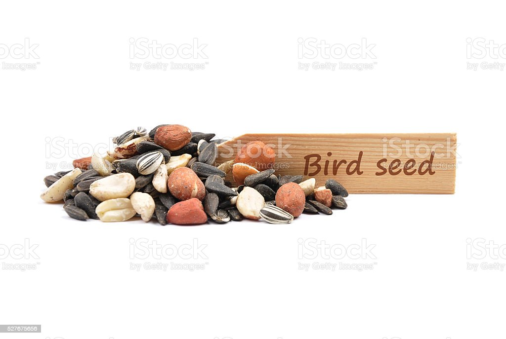 Bird seed at plate stock photo