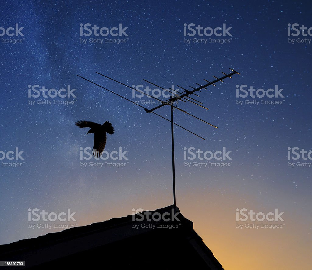 Bird silhouette flying off a roof stock photo