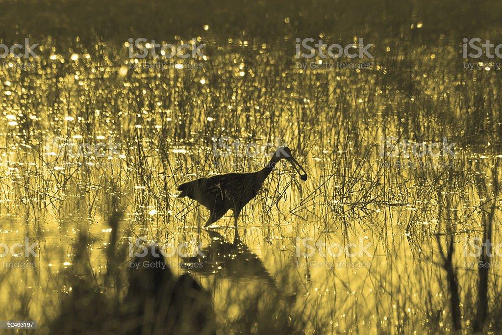 Bird Silhouette in Florida Swamp Grass royalty-free stock photo