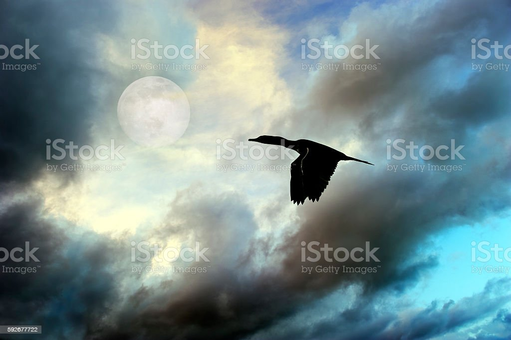 Bird Silhouette Moon stock photo