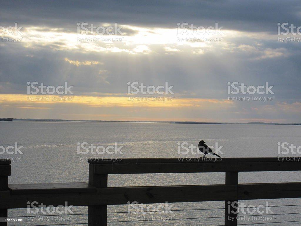 Bird Silhouette on Pier stock photo