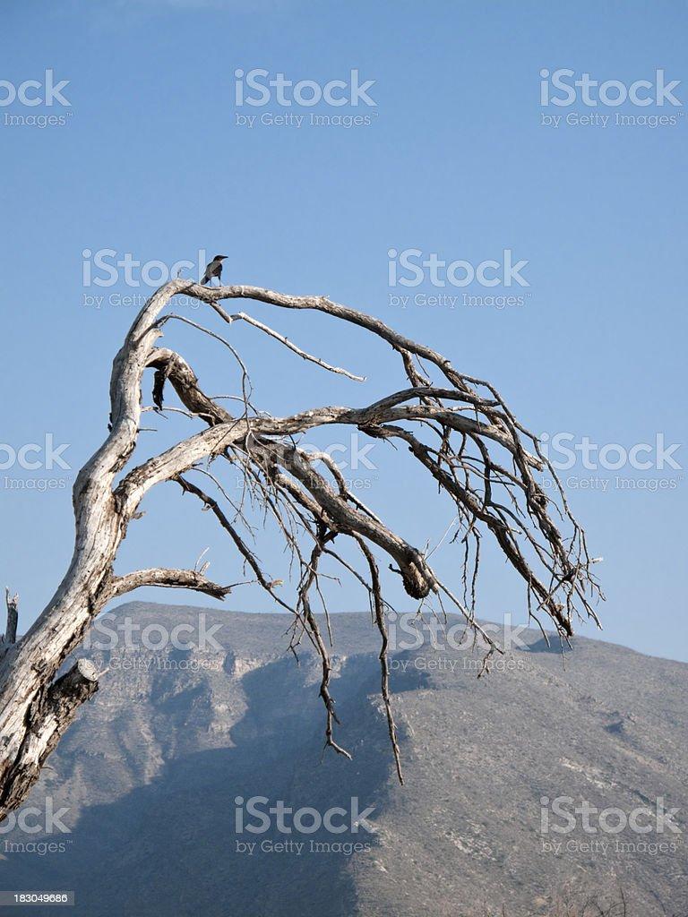 Bird Silhouette royalty-free stock photo