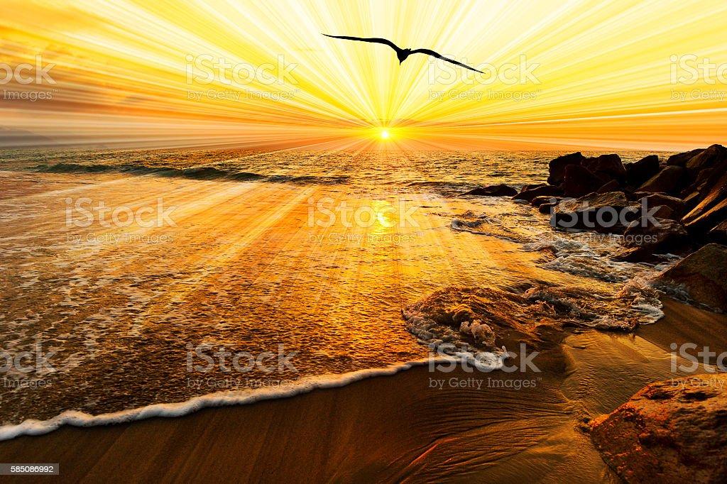 Bird Silhouette Sunset stock photo