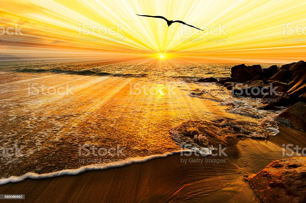 Bird Silhouette Sunset stock photo