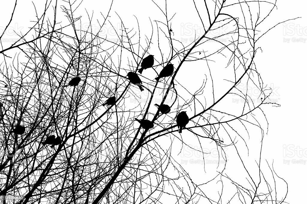 bird silhouettes royalty-free stock photo