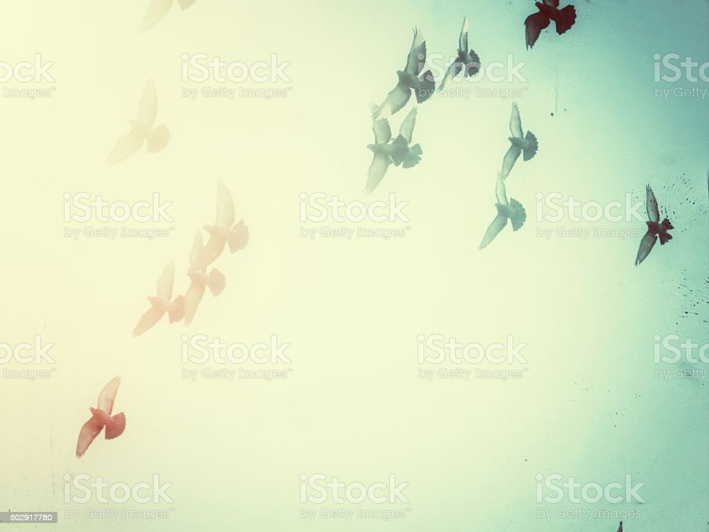 Bird Silhouettes Spread Wings Flying Crossing Over Colored Heavenly Light stock photo