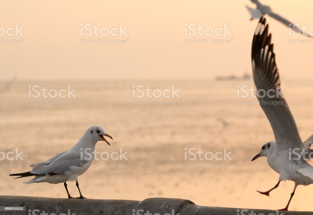 Bird singing to repel another one stock photo
